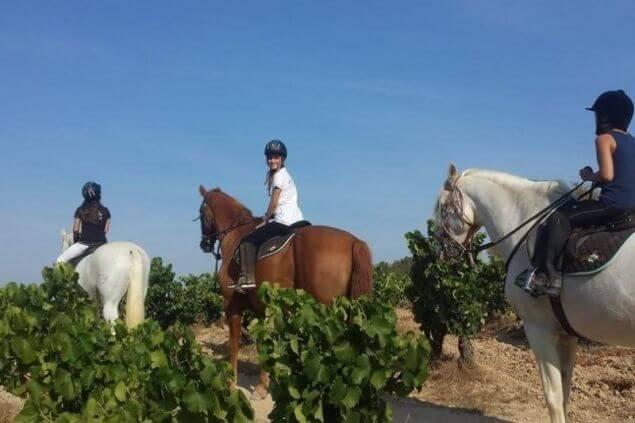 Excursión a caballo entre viñedos