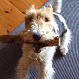 Vacaciones de verano en familia y... con tu mascota