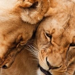 Safari au Kenya avec des enfants