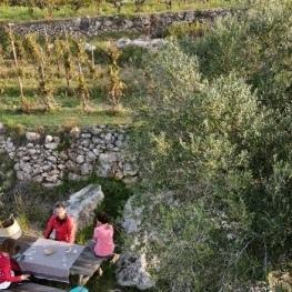 Caminata y cata de vinos