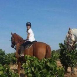 Excursió a cavall entre vinyes