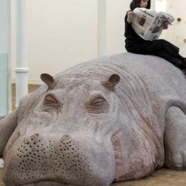 Un hipopòtam al museu!