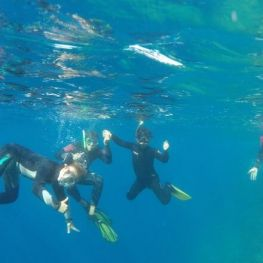 Eco-snorkel a les Illes Medes