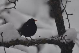 Atelier / Départ: Petits oiseaux de la forêt