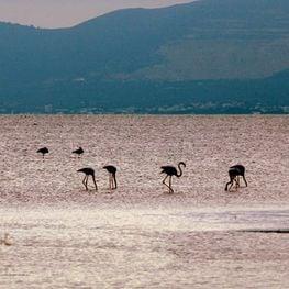 Delta del Ebro, la naturaleza en estado puro