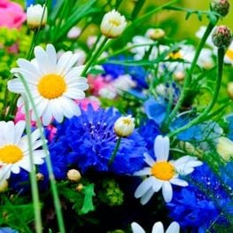 Ferias de flores y jardines