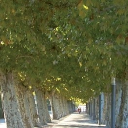 Walk of the trees of Santa Maria de Palautordera