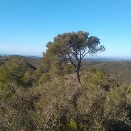 Route du pin solitaire à Roda de Berá