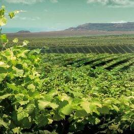 Wine Route: Costers del Segre